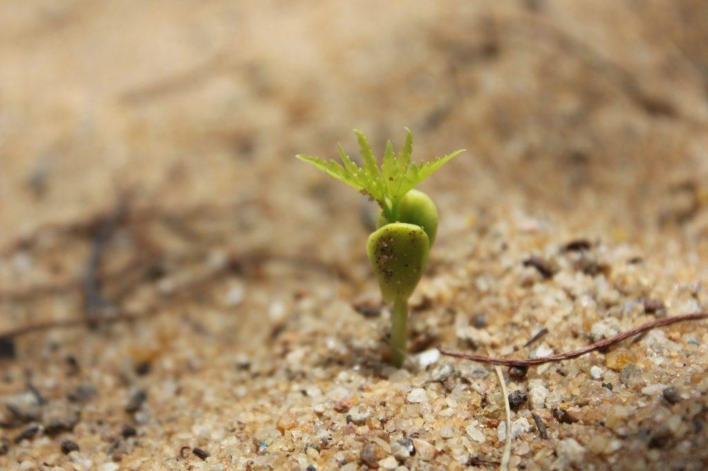 Keimung Bäumchen Saatgut Dünger